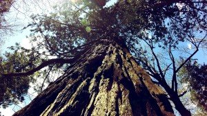 geocache sequoie